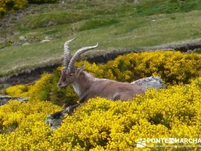 Parque Regional Sierra de Gredos - Laguna Grande de Gredos;viajes organizados desde madrid;viajes ru